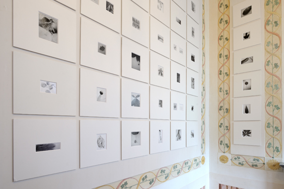 Mariateresa SartoriFeuilles 2018, Pinhole photographs, monotypes, series realized during the residency at Cairn centre d'art,Digne-les-Bains, France maximum measurements 12x10 cm, courtesy the artist and Studio G7 Gallery