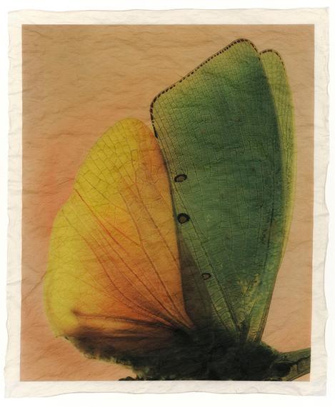 """Gregor Törzs """"à la couleur – Wing Wing 12"""" 2019, Archival-Pigment-Print auf Gampi-Papier© and courtesy Persiehl & Heine, Galerie für Fotografie"""