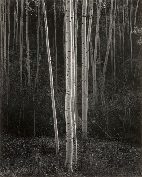 """Lot 1675ANSEL ADAMS (1902-1984)""""Aspens, New Mexico"""", 1958.Gelatin silver print, slightly later print, probably early 1960s. Mounted on firm cardboard.33.4 x 26.8 cm; Cardboard 45.7 x 35.5 cm.Fully signed lower right below the image. Titled and photographer's stamp with address """"Route 1, Box 181, Carmel, California 93921"""" on the cardboard verso. Matted.CHF 15 000 / 25 000"""