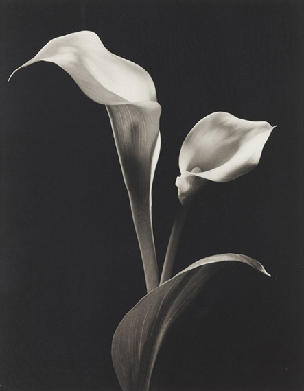 """Lot 26Kenro Izu (b. 1949)""""STILL LIFE #531"""" (1994-1998)Platinum-Palladium print on Arches paperSigned, dated 98, numbered AP3 and with negative number 94 ST 531With stamp signed, negative date 1994, print date 1998, negative and edition number on the frame reverse38x46 cm"""