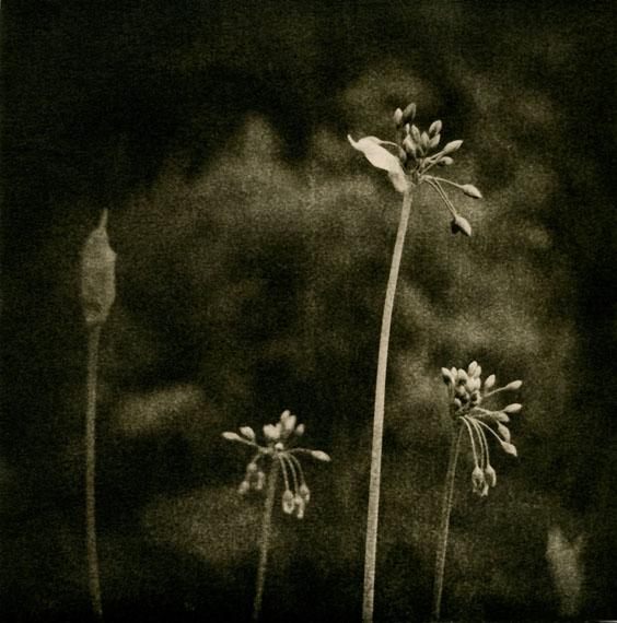 'Allium', LE JARDIN DE NORIKO 2019 © Isa Marcelli