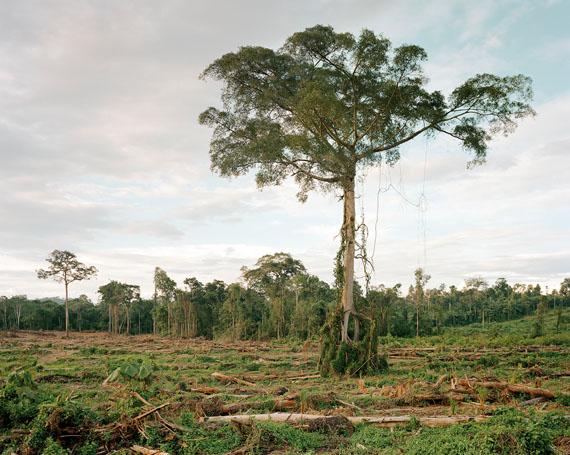 Deforestation Central Kalimantan 10/2012, Indonesia © Olaf Otto Becker