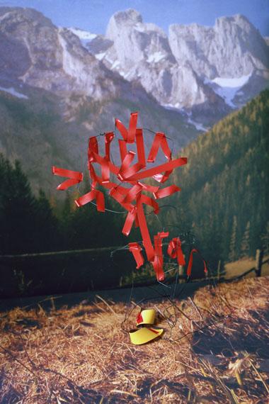 Typical Alpine Flora at the Hochschwab Area © Thomas Albdorf courtesy of the artist