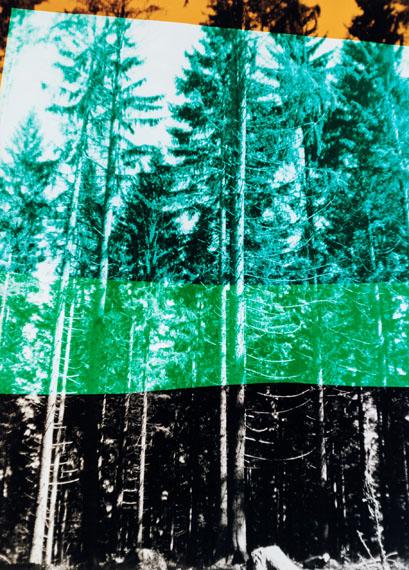 Frank Mädler: Wald in vier Farben, 2019. Analogue C-Print, 124 x 88 cm,  Ed. 4