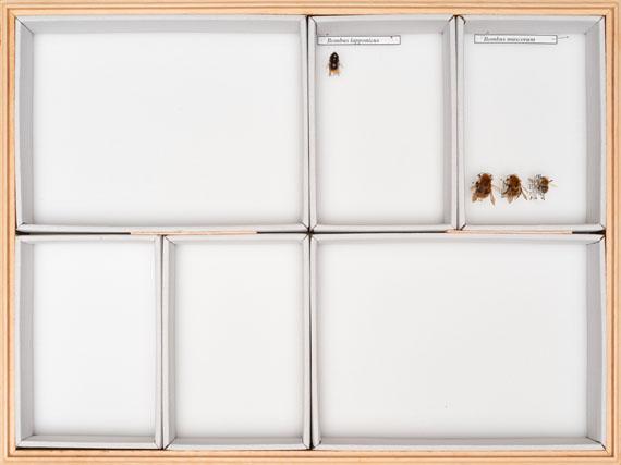 Claudius SchulzeTQ1066-RP5033.18Contemporary bumblebee collection, Krefeld Entomological SocietyPigment print, 201830 x 40 cm© Claudius Schulze, Courtesy the Artist / Galerie Robert Morat