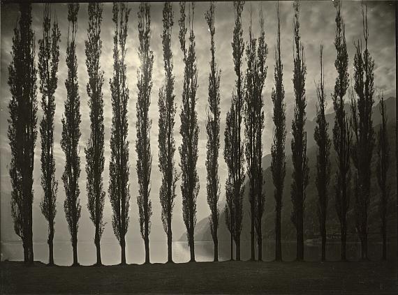 Lot 4299 Albert Steiner. Poplar trees 1920s. Vintage gelatin silver print.