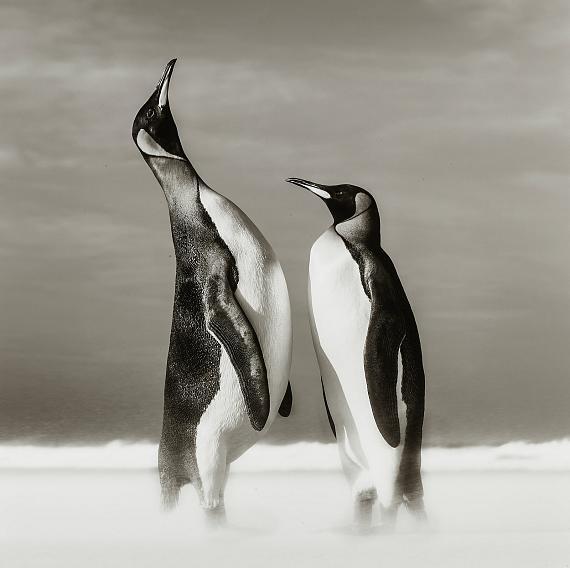 DAVID YARROW (born 1966)All You Need Is Love (The Falklands)US$ 20,000 - 30,000€ 16,000 - 25,000