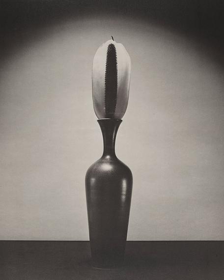 ROBERT MAPPLETHORPE (1946-1989)Desert FlowerUS$ 12,000 - 18,000€ 9,900 - 15,000