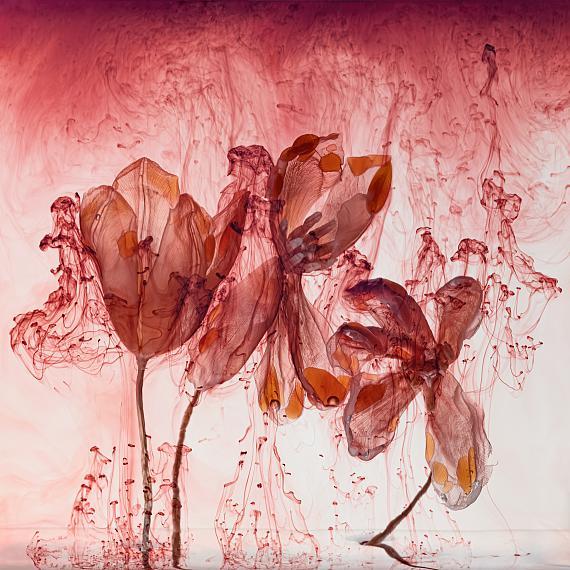 Kathrin LinkersdorffFairies IV/2, 2020Archival pigment print, framed, museum glass150 x 150 cmEd. 3