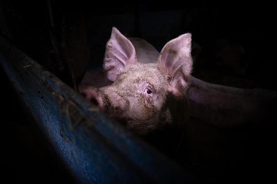 © Konrad Lozinski | We Animals Media
