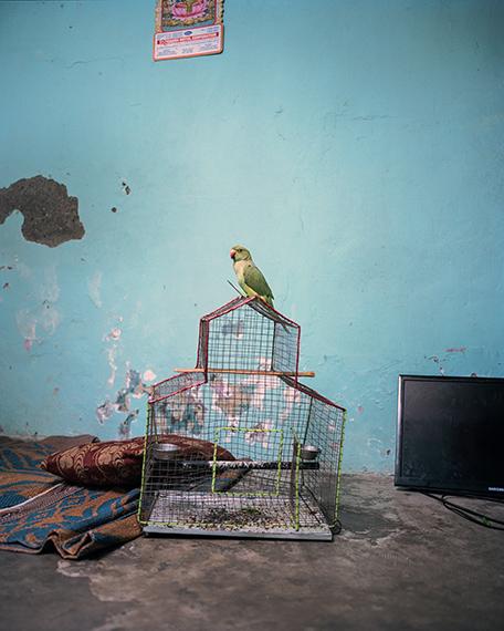 Kalpesh Lathigra, The Tame Bird, 2019