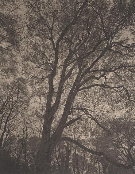 TAKESHI SHIKAMASilent Respiration of Forests: Kanegasaki Komagatake #35, 2005Platinum palladium print by Amansalto on Japan paperImage 82,7 x 65,8 cm / Print : 111 x 76,5 cmCourtesy Galerie Lunn