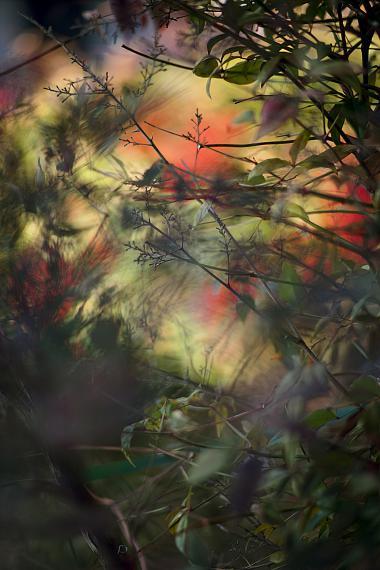 TERRI WEIFENBACH19 February 2014Pigment print33 x 48 cm