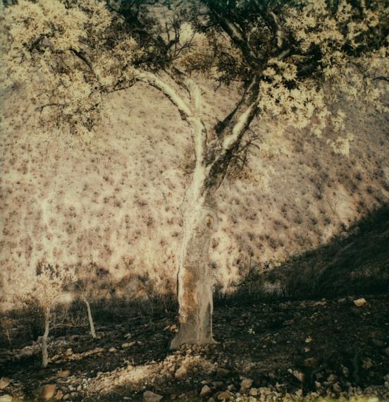 Picturing landscape / Bilder über Landschaften