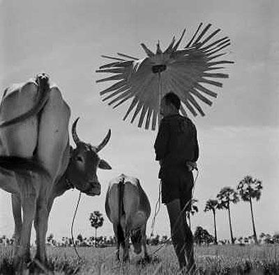 © Werner Bischof/Magnum Photos . Cambodia, 1952