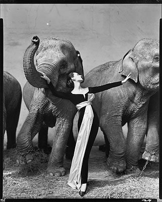 Dovima with elephants, evening dress by Dior, Cirque d'Hiver, Paris, August 1955Photograph Richard Avedon© 2008 The Richard Avedon Foundation