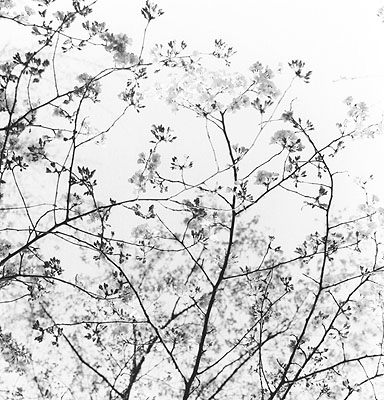 HARUJapan 2008Silbergelatine Print130 x 125 cm© Frauke Eigen