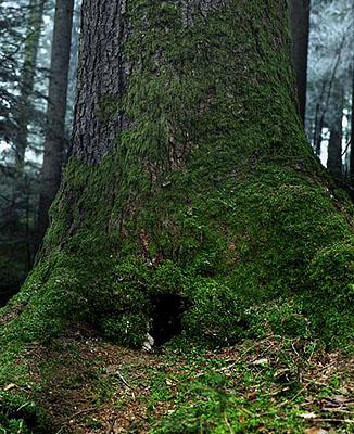 Eva-Fiore Kovacovsky, In the Woods 2007, c-print on MDF, 200x160cm, 3/5