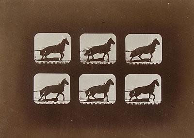 Eadweard  Muybridge (Edward James Muggeridge)HORSE IN MOTION, FROM THE ALBUM