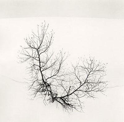 Ayako's Tree, Higashikura, Hokkaido, Japan, 2008