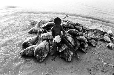 Am Strand von Cayar, Senegal 1960 © Robert Lebeck