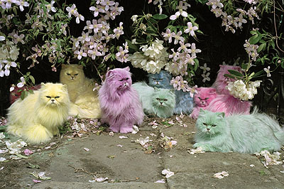 Pastel Cats© Tim Walker courtesy Michael Hoppen ContemporaryC-type print20 x 30 inches