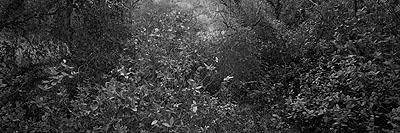 © Christian Vogt, Naturräume VII, 2008, Carbon pigment print on rag paper, 29.5 x 90 cm, Edition of 3
