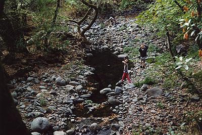 Creekside, Sonoma, 2004 © Ari Marcopoulos