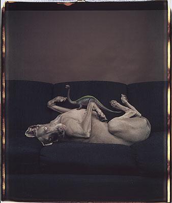 William Wegman, 1987 © Polaroid collection