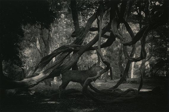 #1546 from Kawa series© Masao Yamamoto