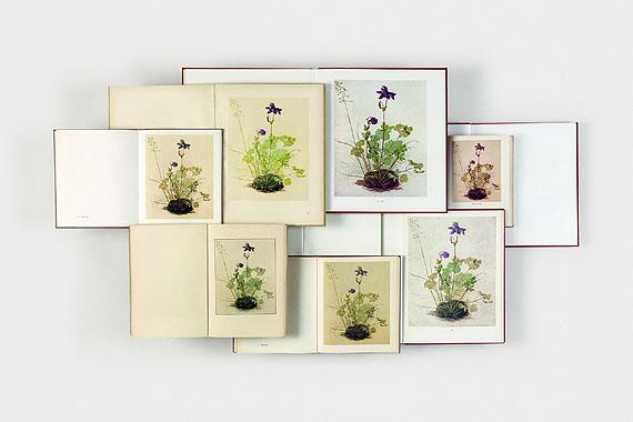 """Claudia AngelmaierAkelei, 2004aus der Serie """"Pflanzen und Tiere""""Farbfotografie© Claudia Angelmaier"""