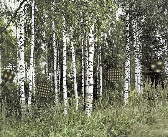 Birches, from the series Grey Diary, 2006-08Digital C-print (Lambda) on aluminium42 x 53 cmEdition of 52008 © Niina Vatanen / courtesy Gallery TAIK