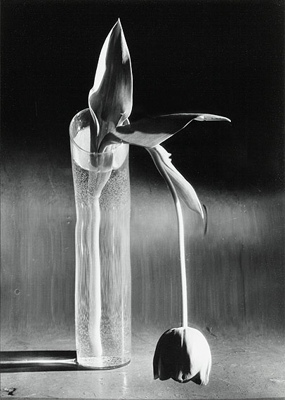 André Kertész (1894-1985)Melancolic Tulip, 1939Silver print, c. 1970. 24,5 x 17,5 cm without frame,55 x 45 x 4 cm with frameEdition number unknown.© BONO 2011