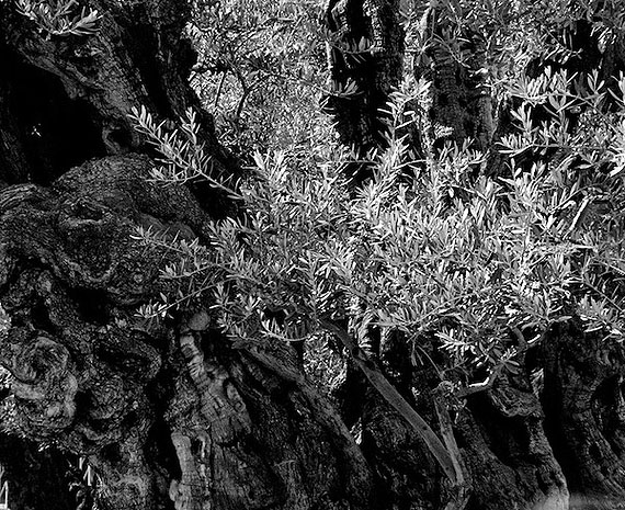 Mikhail Rozanov. The Garden of Gethsemane, from the Devotion series, 2009