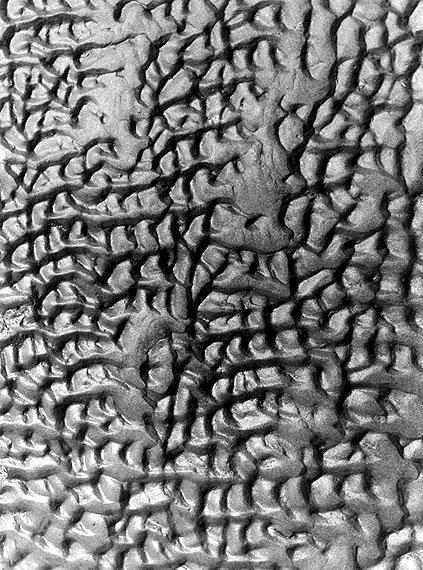 Alfred Ehrhardt © bpkWattenmeer, 1933-36Vintage, Gelatinesilberabzug23,7 x 17,7 cm