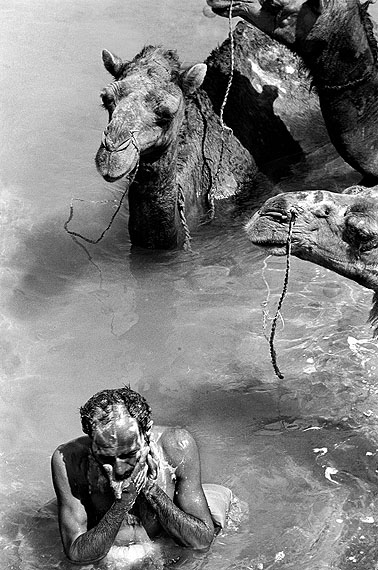Bahman Jalali , A Baluch man bathing with his camels in a river in Baluchestan, Iran , Aus des Serie Daily Life (1992) , © Rana Javadi, 2011