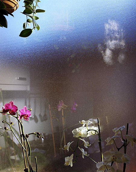 Jessica BackhausOrchids in Salzburg2006Courtesy the artist und Robert Morat Galerie, Hamburg/Berlin