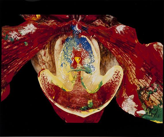 Nobuyoshi Araki, Painting flowers, 2005, Cibachrome Print, 69-teilig, je 50 x 60 cm