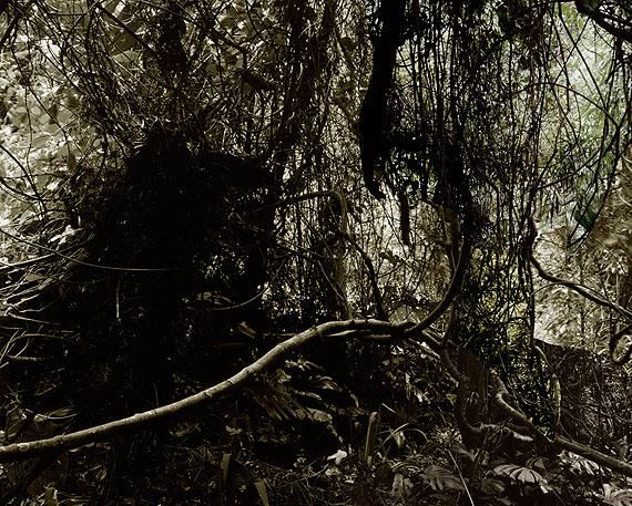 Caio ReisewitzManacapuru, 2011c-print, dia sec180 x 225 cm