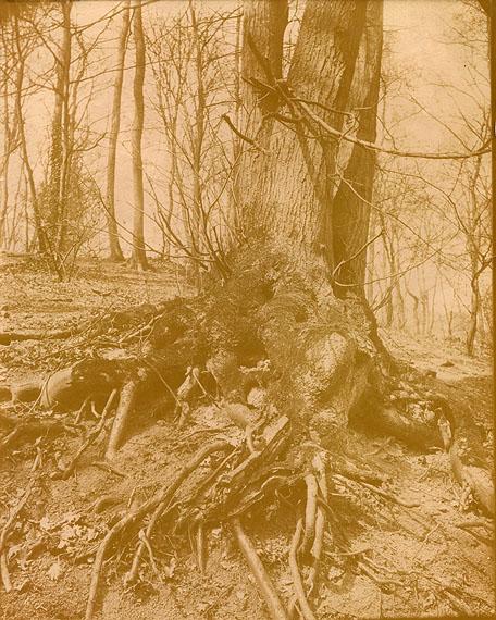 Eugène Atget (1857-1927)Parc de Saint Cloud. c. 1900.Courtesy Kapandji-Morhange / Ader