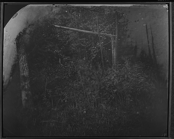 Sally Mann: Untitled (Wilderness #31), 2002© Sally Mann. Courtsey Robert Bayer, Bildpunkt AG Basel / Galerie Karsten Greve AG St. Moritz
