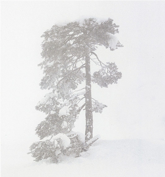 Trine Søndergaard & Nicolai Howalt Tree no. V 2007 42 1/2 x 37 inchesCourtesy Bruce Silverstein Gallery