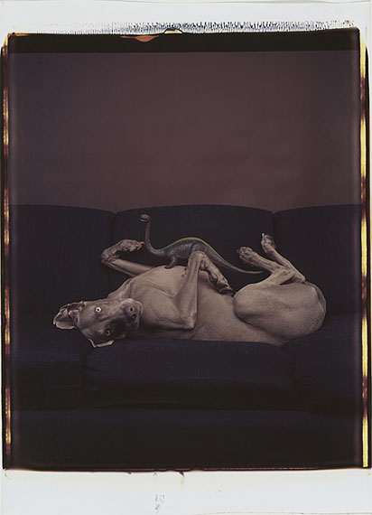 William WegmanUntitled1988, Polaroid Polacolor20 x 24''© William Wegman