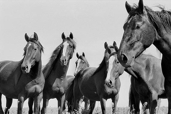 Herd of Wild Horses, Argentina, 1964 © René Burri / Magnum Photos
