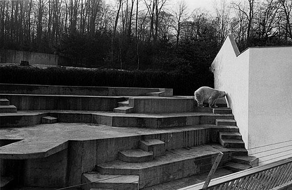 aus der Serie Zoologische Gärten, 1984 © Hildegard Ochse