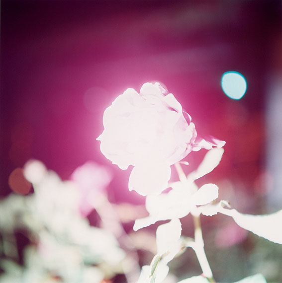 Rinko Kawauchi Untitled, from the series 'Illuminance' 2009 © Rinko Kawauchi