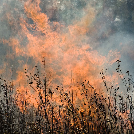 Jane Fulton Alt: The Burn