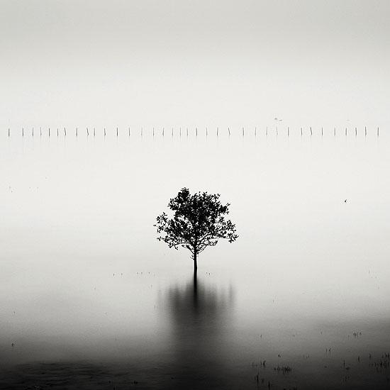 Mangrove Tree - Vietnam© Josef Hoflehner