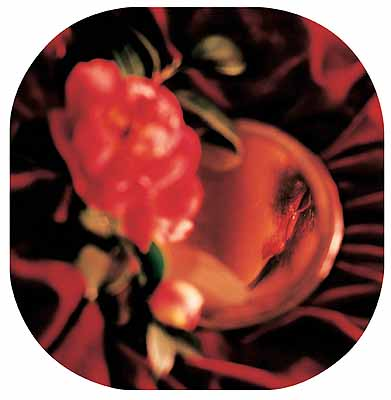 Chen LingyangTwelve Flower Months1999.11 - 2000.12The Eleventh Month CamelliaColour Photographfrom the Exhibition
