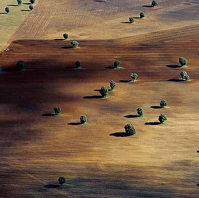 Bäume wie Klein-Oasen in einem Acker, New South Wales, Australien, 1978